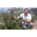 Aronia melanocarpa 2 ANI 50-60 CM