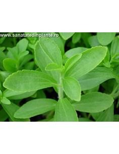 Stevia Rebaudiana - Indulcitor Natural Noncaloric