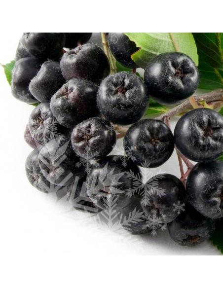Fructe Aronia - congelate 1kg